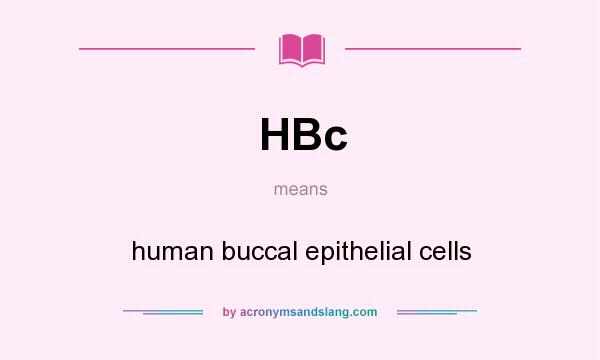 What does HBc mean? It stands for human buccal epithelial cells