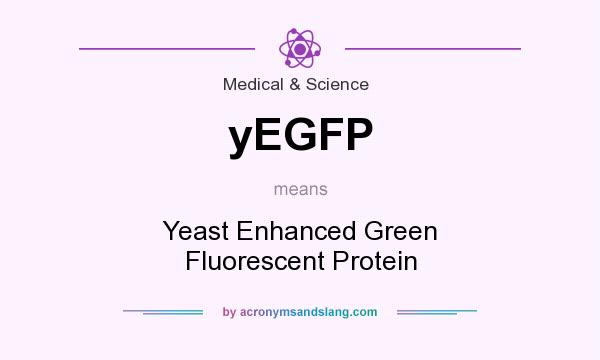 What does yEGFP mean? It stands for Yeast Enhanced Green Fluorescent Protein