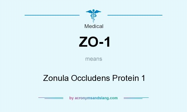 What does ZO-1 mean? It stands for Zonula Occludens Protein 1