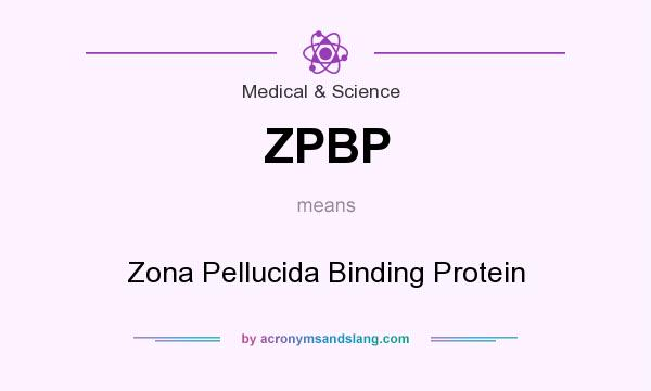 What does ZPBP mean? It stands for Zona Pellucida Binding Protein