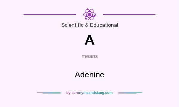 What does A mean? It stands for Adenine