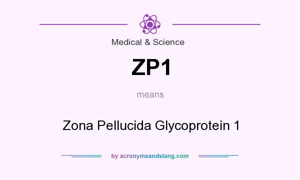 What does ZP1 mean? It stands for Zona Pellucida Glycoprotein 1