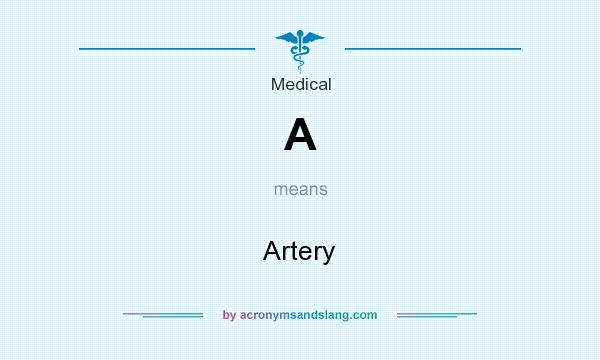 What does A mean? It stands for Artery