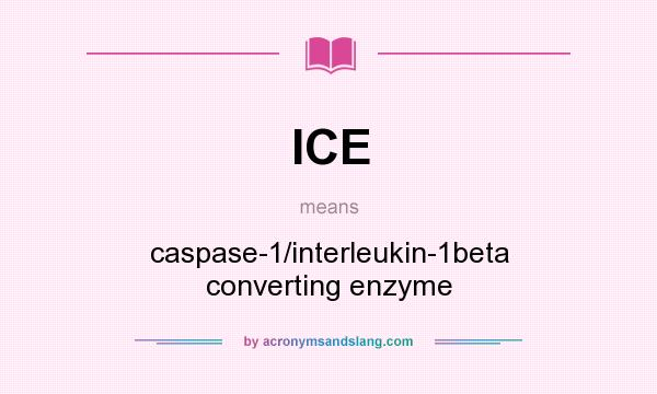 What does ICE mean? It stands for caspase-1/interleukin-1beta converting enzyme