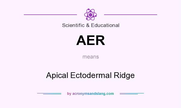 What does AER mean? It stands for Apical Ectodermal Ridge